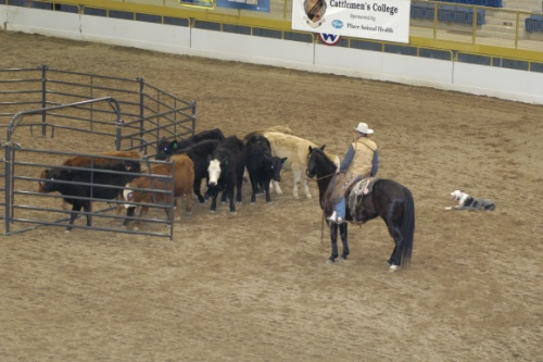 Charlies Cowdogs Clinics And Demos
